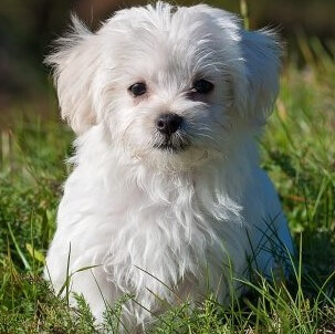 Puppy Care Health Plans